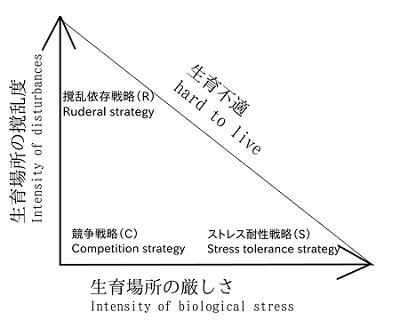 CSR三角形仮説