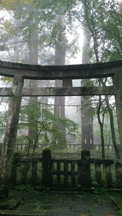 日光滝尾神社 杉